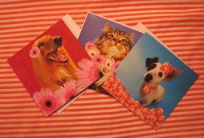 Dierenkaarten: twee honden en een kat